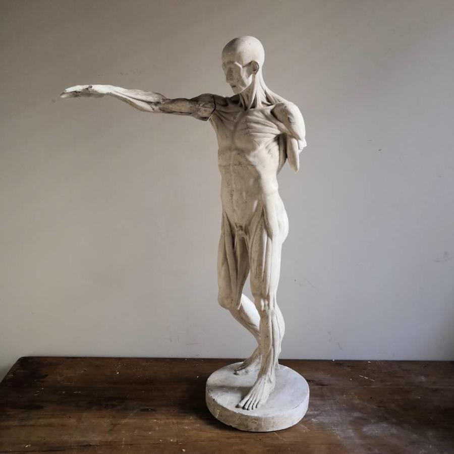 Antique Ecorche figure after Houdon