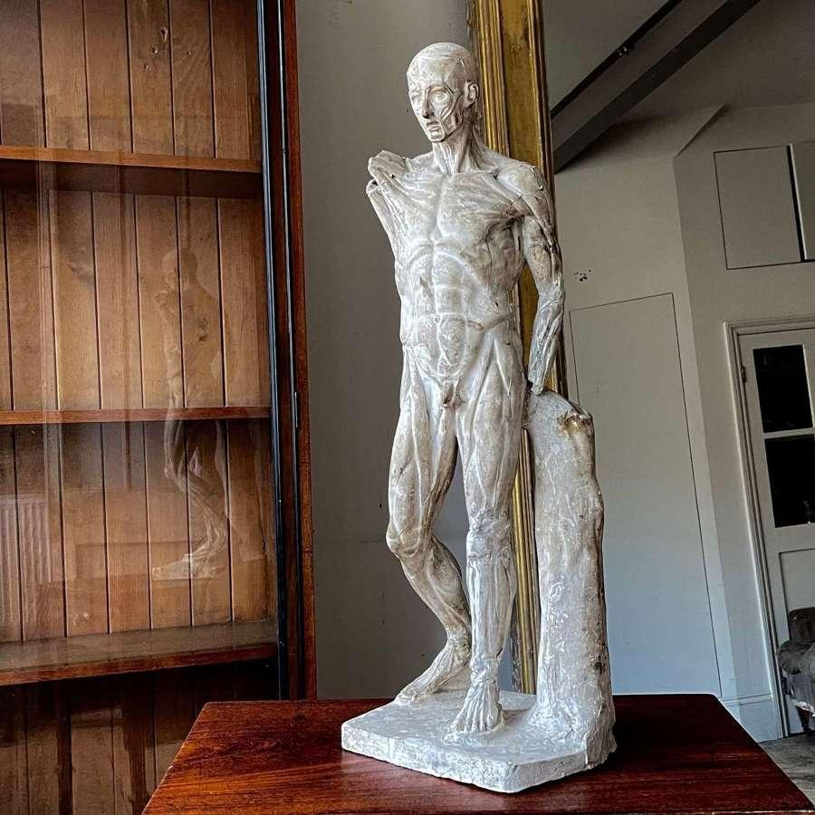 19th century Ecorche figure